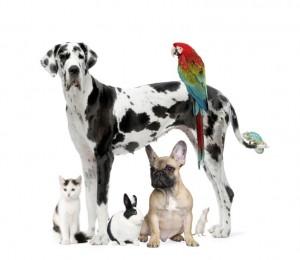 pet food market packaging